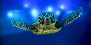 9311_turtle1_1_460x230