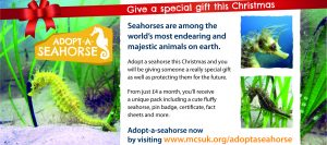 481-2015b Adopt-a-Seahorse Advert Half Page Christmas v3 cropped copy
