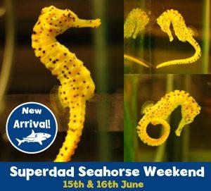 Seahorse total copy