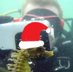 Spiny SH and volunteer Christmas