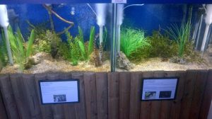 two display tanks