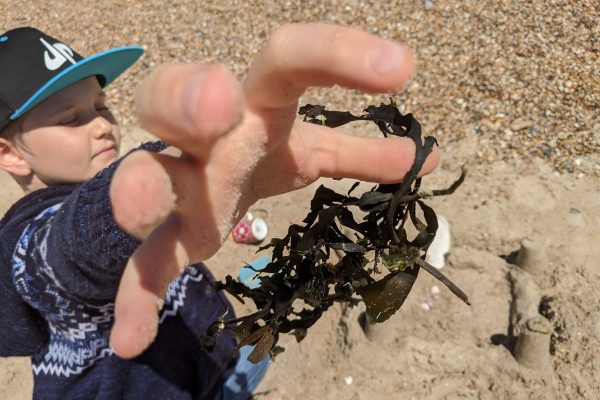 Seaside forage for crafting 1